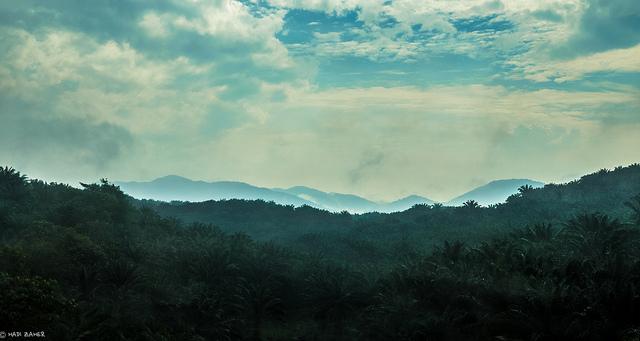 Indonesia cracks down on deforestation atlast